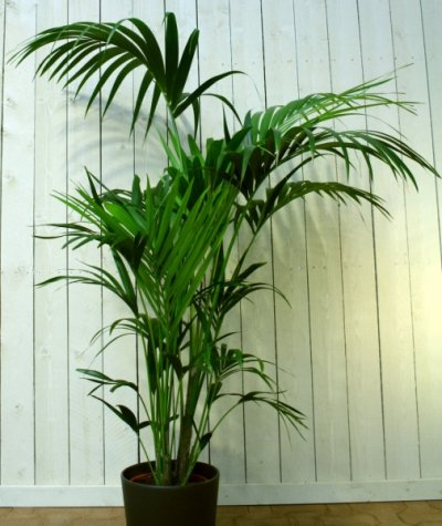 Millised taimed sobivad toa õhu puhastajateks