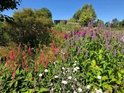 7 - Palusalu Aiad OÜ aia planeerimine, aia hooldus, aiakujunduse kursused