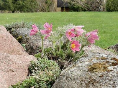 5 - Palusalu Aiad OÜ aia planeerimine, aia hooldus, aiakujunduse kursused