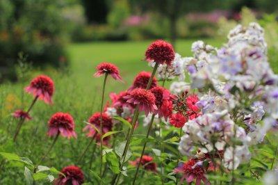 6 - Palusalu Aiad OÜ aia planeerimine, aia hooldus, aiakujunduse kursused