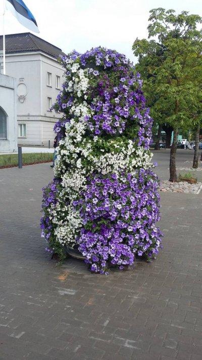 5 - Konteinerhaljastus -lilledekoratsioon linnas