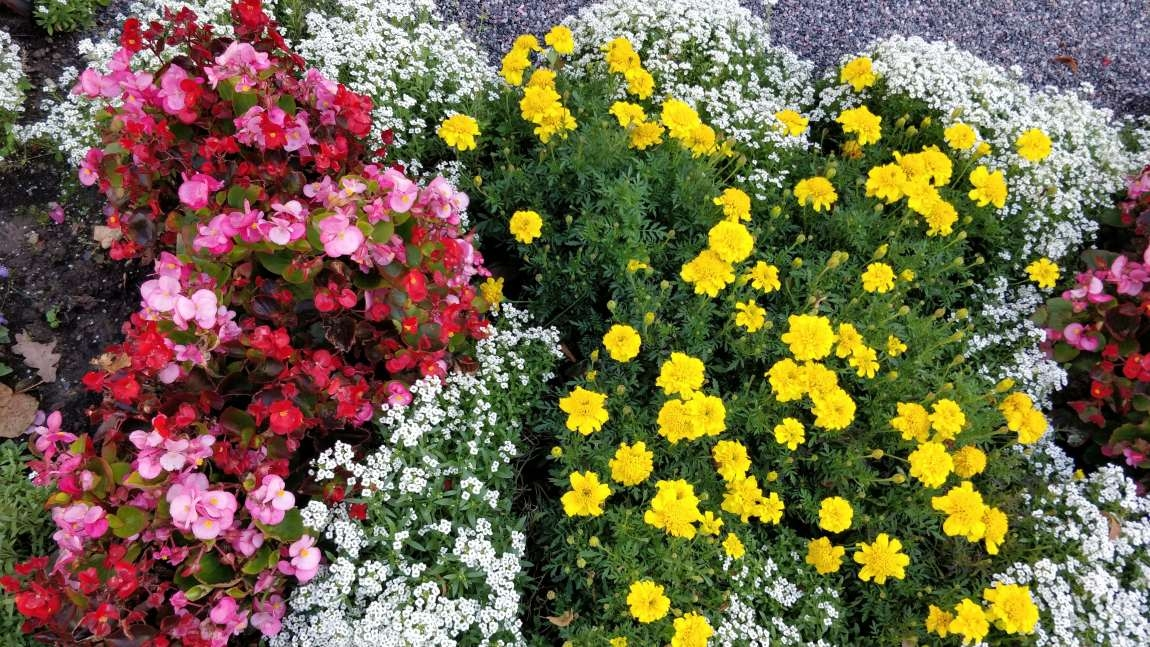 """Inspiratsiooni aiakujunduseks Tallinna Lillefestivalilt 2018: """"Õnnesoov lillede keeles"""" ja """"Ajaloo peegeldus aias"""""""