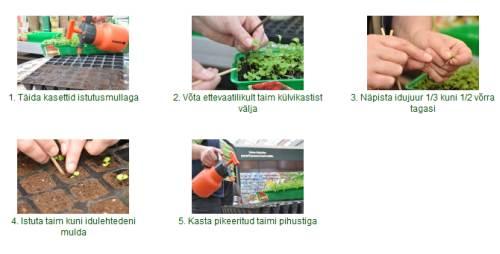 Taimede ettekasvatamine