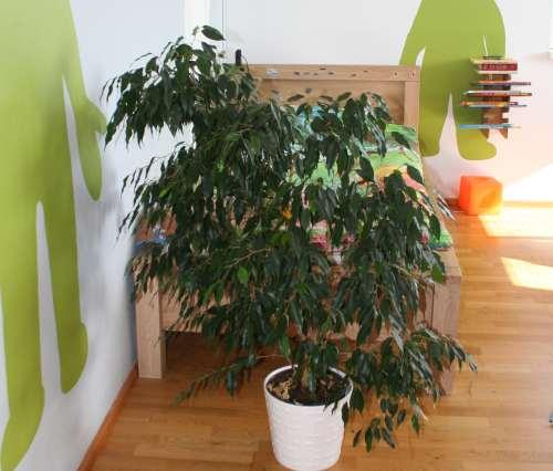 Taimega on peatatud energia liikumine uksest voodini.