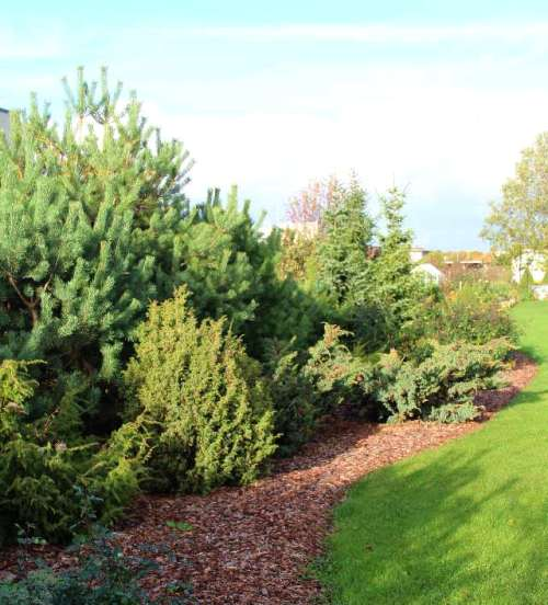 Okaspuude kooslus uuselamurajoonis võrkaia ees. Hea kaitse nii naabrite pilkude eest kui ka tuule takistuseks.