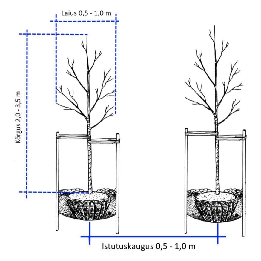 Sammasõunapuu
