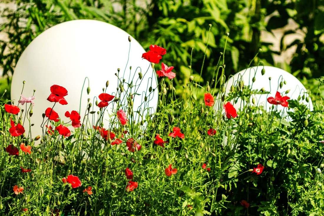 Parim Aed – Meelte Aed Tallinna Botaanikaaias