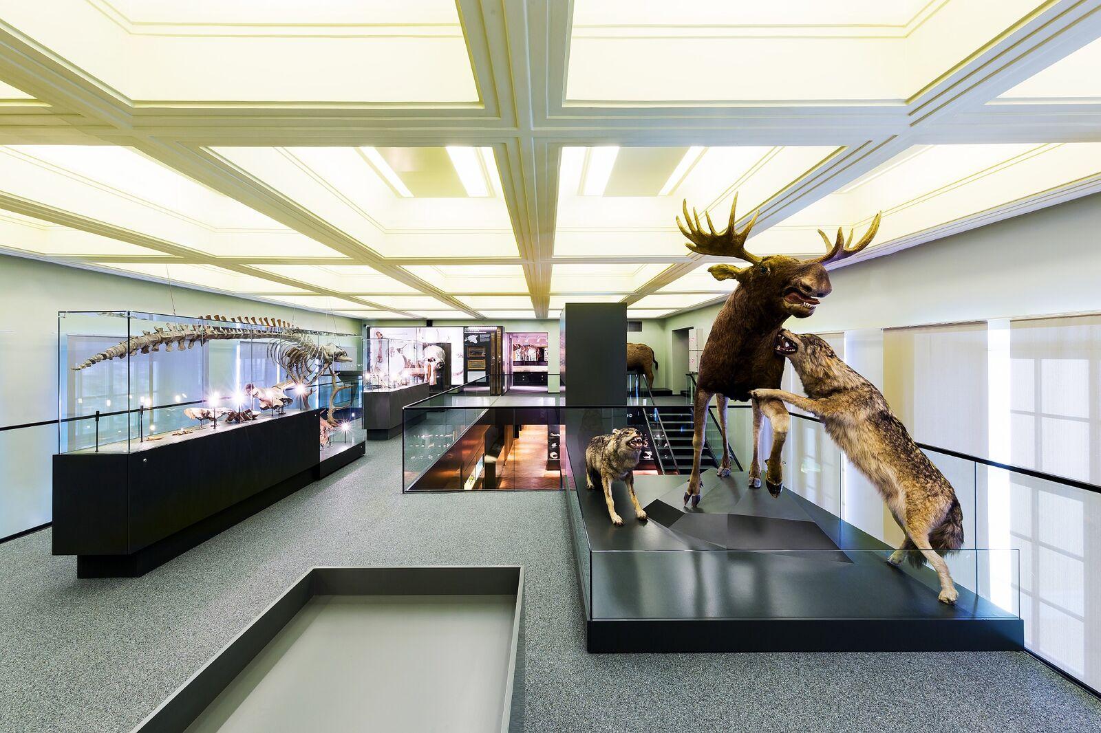 Parim Muuseum/Näitus – TÜ Loodusmuuseum