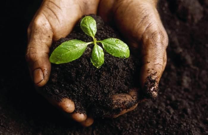 Matogardi uue koostisega külvimuld tagab köögiviljataimede täieliku haiguskindluse