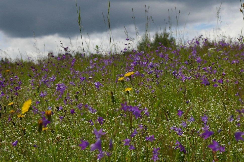 Suurte kruntide puhul on hetkel väga populaarseks saanud vabakasvulised lilleniidud.