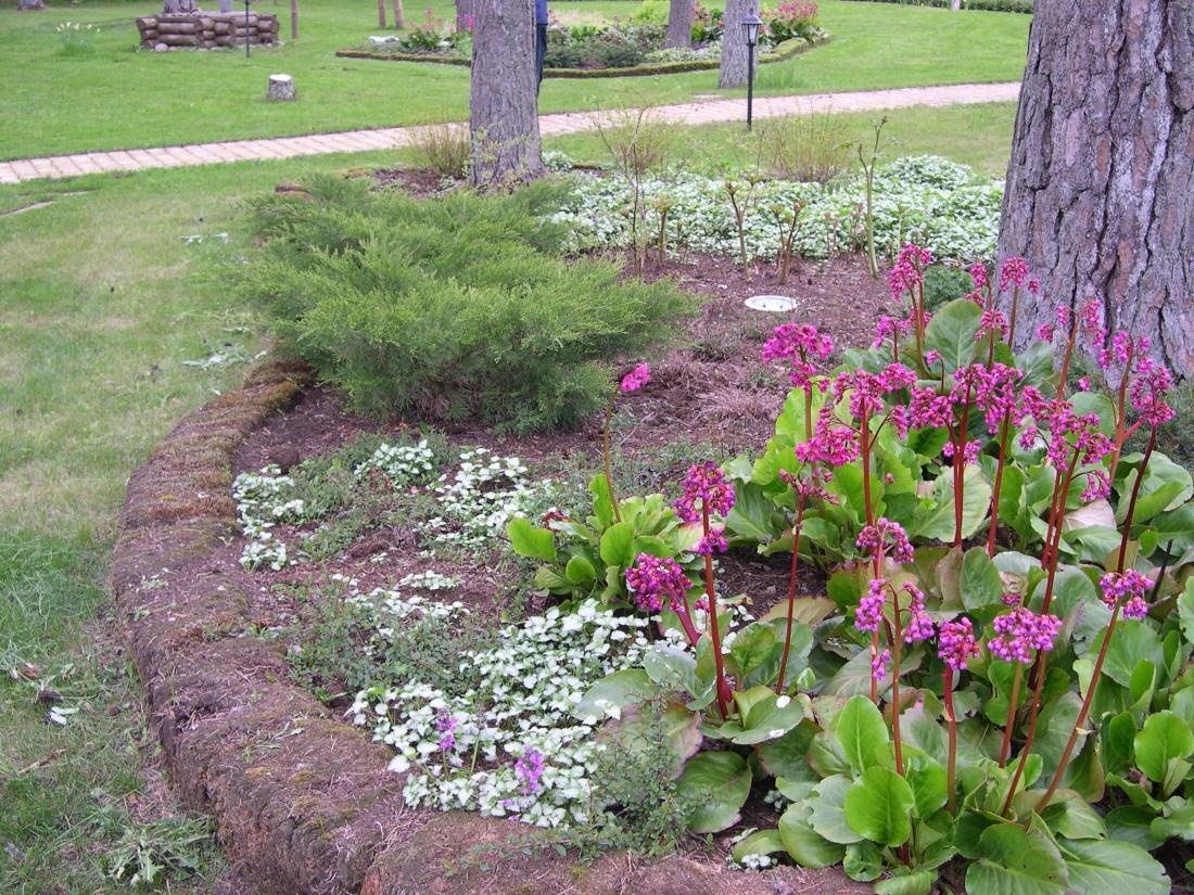 Mändide all on pinnas happeline, tuleb eelistada sellele pinnasele sobivaid taimi!