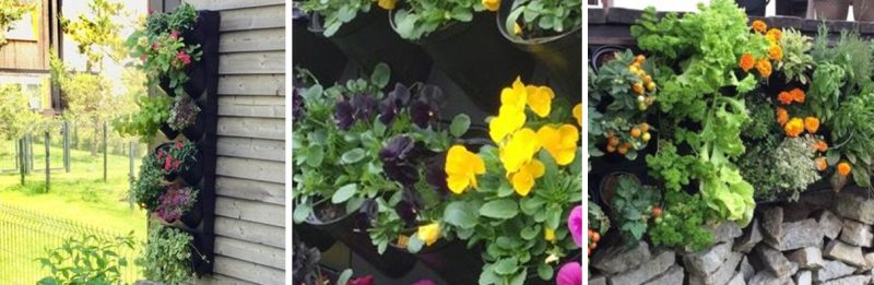 Taimeseina moodulid loovad hea võimalus hakata rõduaednikuks