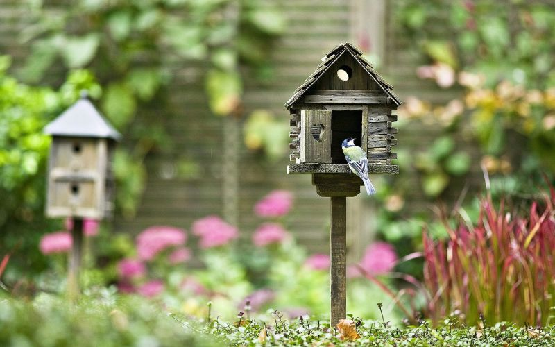 Why you need a bird house telegraph.co.uk