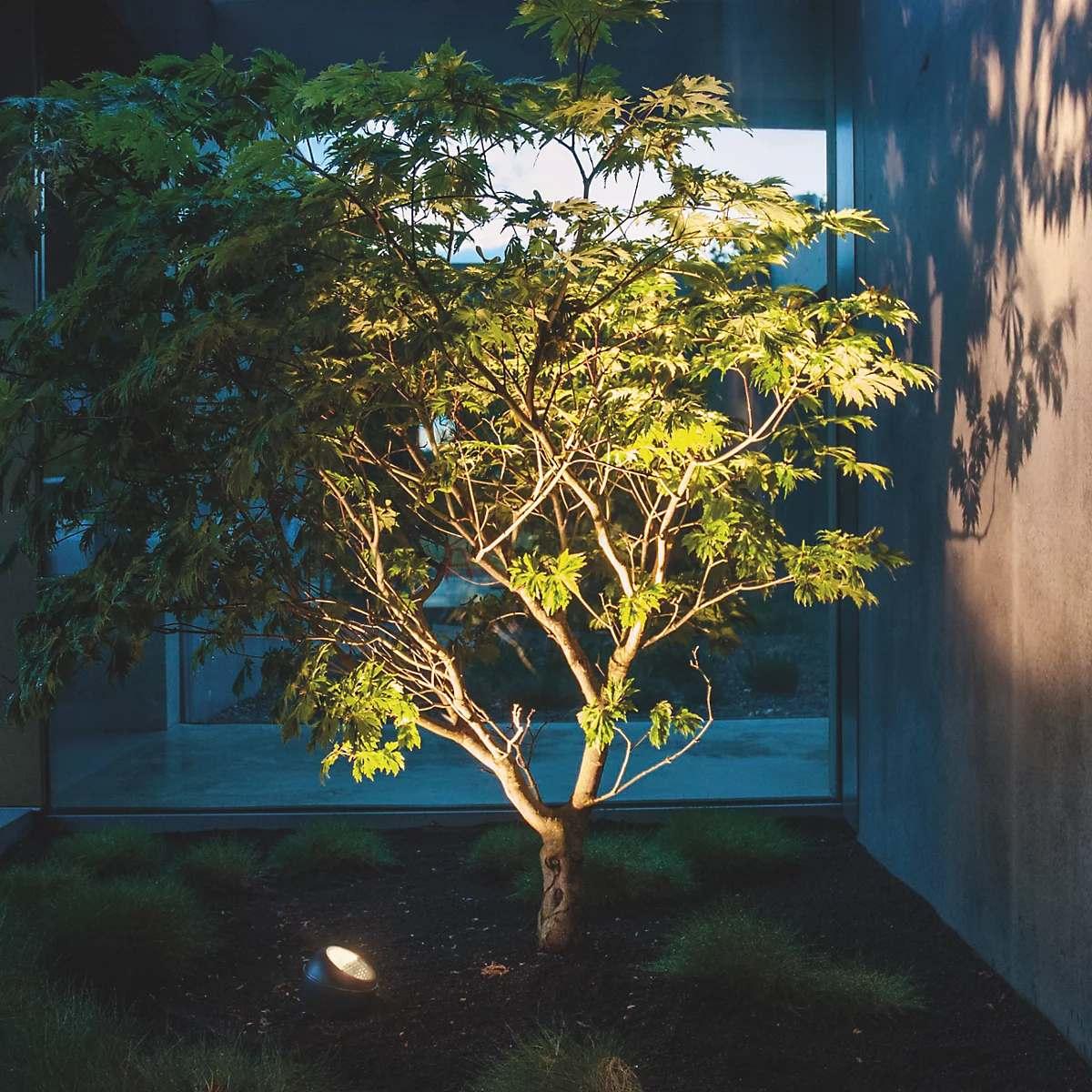 Valgustatud puu peegeldumine seinale - IP44.de Shot Connect Garden luminaire LED